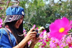Women Thai Portrait on Cosmos Flowers Field at Countryside Nakornratchasrima Thailand Royalty Free Stock Images