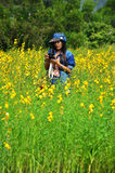 Women Thai Portrait on Crotalaria juncea  Field at Countryside Nakornratchasrima Stock Photography