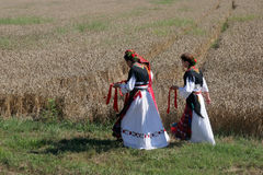 Women in traditional costumes go into the field to harvest wheat Royalty Free Stock Photo