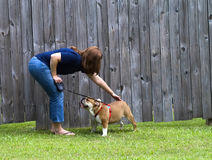 Women training dog Royalty Free Stock Photos