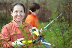 Women trimming bough. Two women trimming bough of an bush Royalty Free Stock Photo