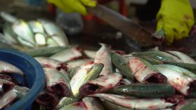 Women undress fresh fish. Dark room. Insanitary conditions. Fresh fish on a market counter in Vietnam. Fresh fish. On this video you can see market place on stock footage