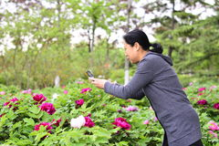 Women use mobile phones to take pictures of flowers Stock Photography