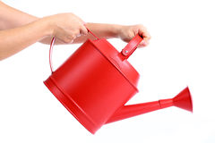 Women used hand holding Red Watering pot. With white background Royalty Free Stock Photography