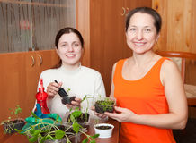 Women with various seedlings Royalty Free Stock Images