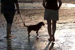 Women Walking The Dog. Back lit portrait of two women walking a cute borkie dog at the beach Stock Photos
