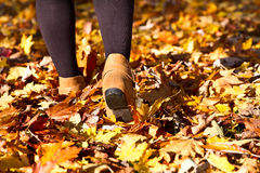 Women walking on full of autumn leaves. Women with boot walking over dead leaves during autumn Royalty Free Stock Image