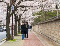 Women walking under sakura trees Stock Image