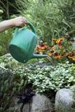 Women watering garden. Gardener woman cute home care gardening flowers hobby beautiful lady royalty free stock photos