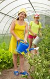 Women watering  with  watering pot Stock Images