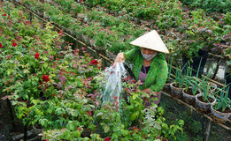 Women wear conical straw hat was watering the plan Stock Photography