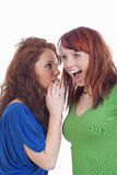 Women whispering gossip. Two young women whispering gossip - isolated on white royalty free stock images
