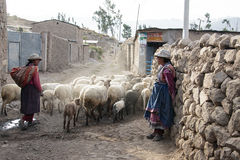Women who are with their sheep in the barn. Scenes of working life in a small village lost in the Colca Canyon in Peru stock image