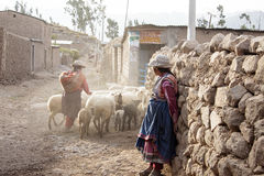 Women who are with their sheep in the barn. Scenes of working life in a small village lost in the Colca Canyon in Peru royalty free stock images
