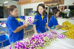 Women work at the orchid farm in Samut Songkram, Thailand. Stock Images