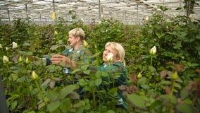 Women work in the rose garden stock footage