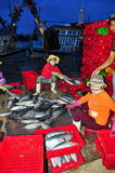 Women workers are collecting and sorting fisheries into baskets after a long day fishing in the Hon Ro seaport, Nha Trang city Stock Image