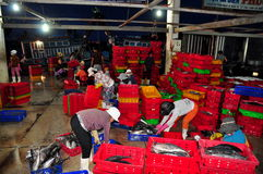 Women workers are collecting and sorting fisheries into baskets after a long day fishing in the Hon Ro seaport, Nha Trang city Royalty Free Stock Image