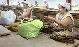 Women working in a cigar factory Stock Images
