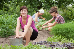 Women working in   garden. Three women working in her vegetable garden Stock Image