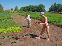 Women working in garden Royalty Free Stock Photo