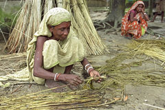 Women working in jute industry Bangladesh. Bangladesh Tangail city: portrait of a woman jute is to peel them removing the fiber from the stem wood or pipe. Jute Royalty Free Stock Photo