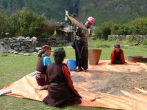 Women working outdoor - Tsum Valley - Nepal Stock Image
