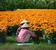 Women working at the plantation in southern Vietnam Stock Photos