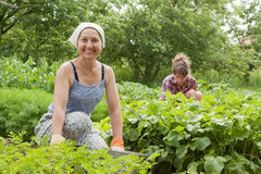 Women working in  vegetable garden. Two women working in her vegetable garden Stock Photos