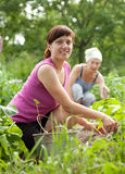 Women working in  vegetable garden Royalty Free Stock Photography