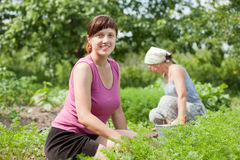 Women working in  vegetable garden Royalty Free Stock Photos