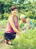 Women working in  vegetable garden Stock Image