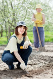 Women works at  garden in spring Royalty Free Stock Photo