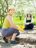 Women works at  garden in spring Stock Photo