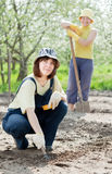 Women works at  garden in spring Royalty Free Stock Image