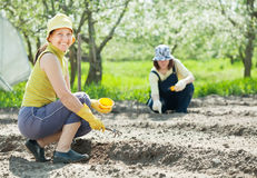 Women works at vegetables garden Stock Images