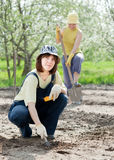 Women works at vegetables garden Royalty Free Stock Images