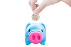 Women young hand putting money coin into saving pig, finance theme royalty free stock photo