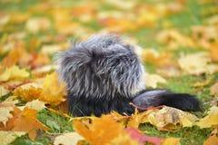 Fur hat Royalty Free Stock Image