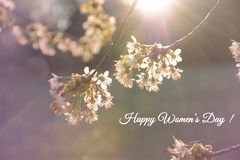 Womens day card. Branches of a blossoming tree in the sunlight on bokeh background. Womens day card. Branches of a blossoming tree in the sunlight closeup on royalty free stock photography