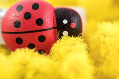 Womens day. Macro mimosa and toy ladybug for womens day royalty free stock photos