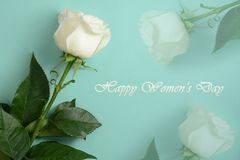 Womens day 8 march card. White rose on turquoise background royalty free stock image