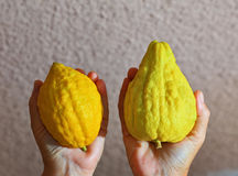 Womens hands holding the etrog Stock Photography
