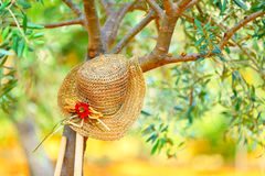 Womens hat on the tree Stock Images