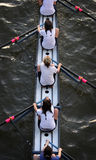 Womens rowing team. Birds eye view of womens rowing team Stock Image