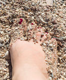 Womens sandy feet on beach Stock Images