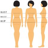 Womens size. Size Chart for Women's Clothing royalty free illustration