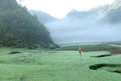 A womnan walk on the mist grassland royalty free stock image