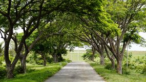 Wonder how a tree tunnel looks like? royalty free stock photo