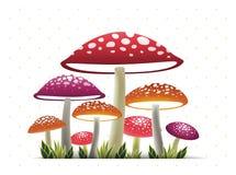 Wonder mushroom Royalty Free Stock Photography